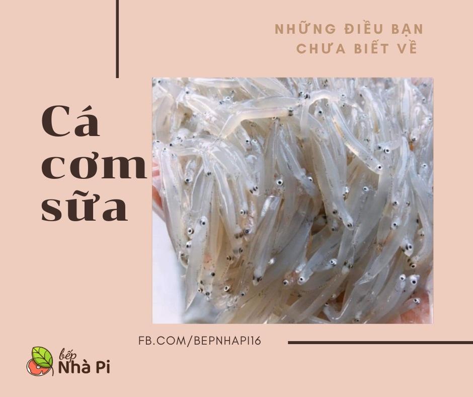 Cá cơm sữa tươi | bếp nhà pi | bepnhapi.com | cá bờm | cá mờm
