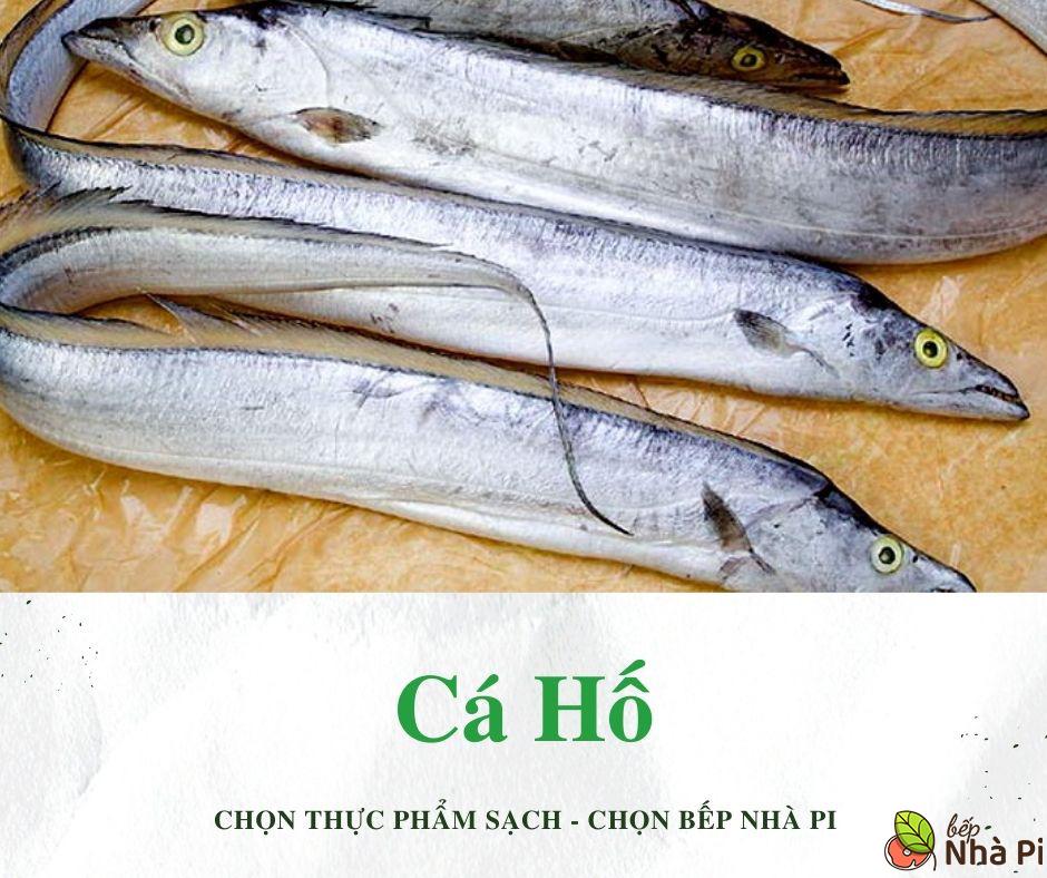 Cá hố là cá gì   Bếp Nhà Pi   bepnhapi.com