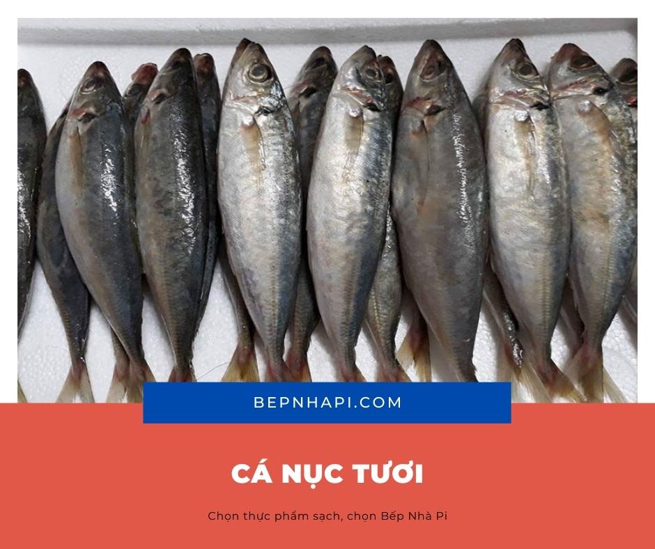 Hình ảnh cá nục tươi | bếp nhà pi | bepnhapi.com