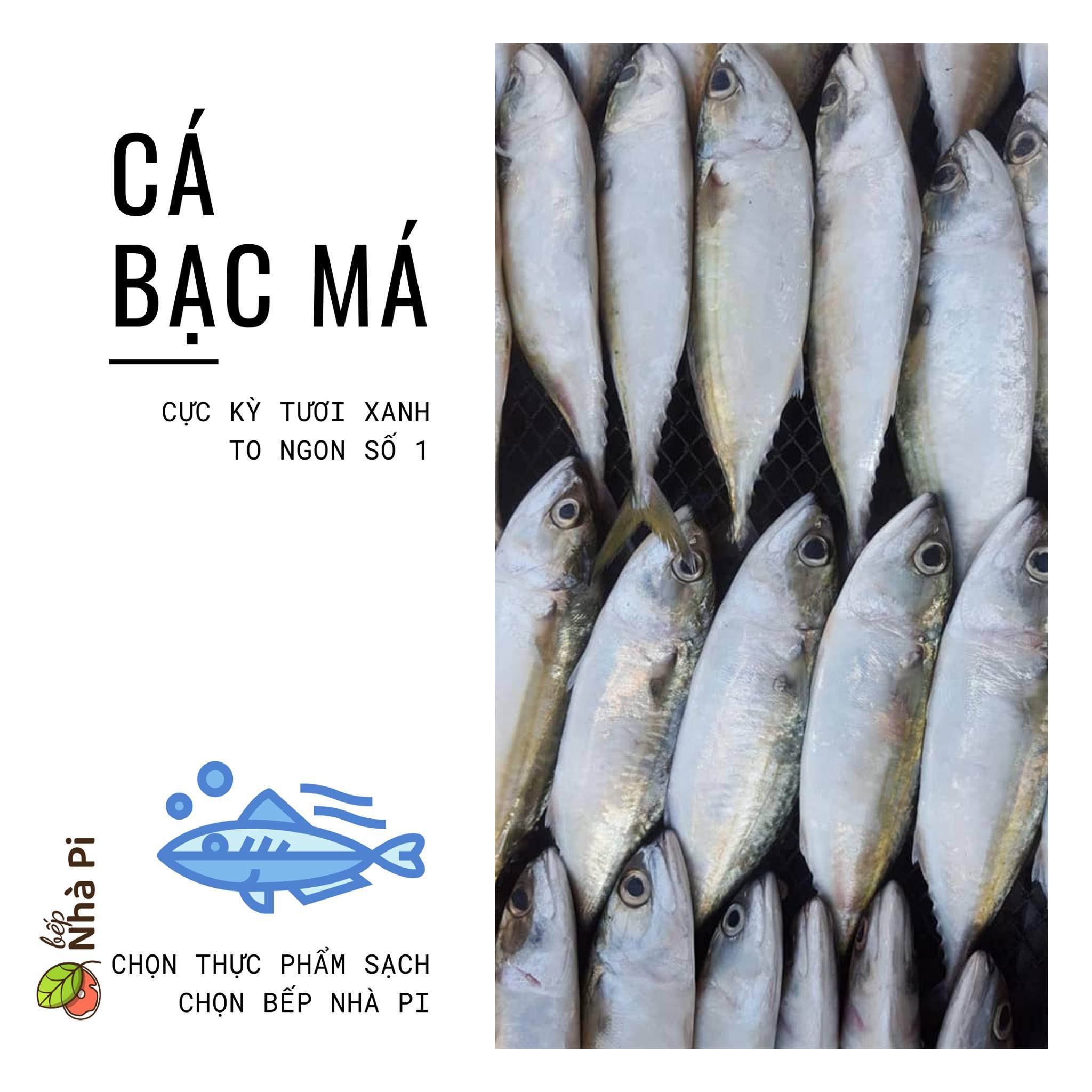Cá bạc má giàu dinh dưỡng   bếp nhà pi   bepnhapi.com