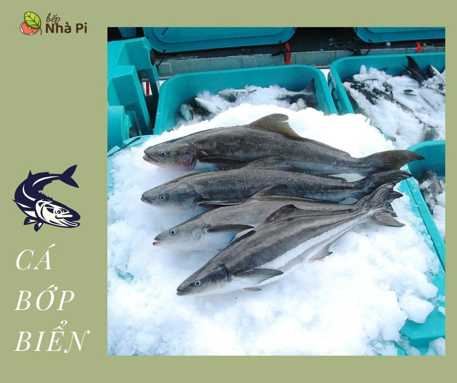 Cá bớp nguyên con | bếp nhà pi | bepnhapi.com