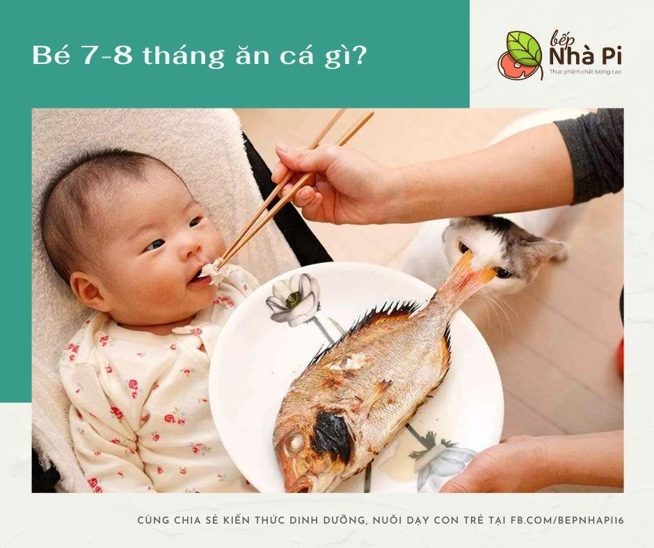 Bé 7-8 tháng ăn được cá gì?